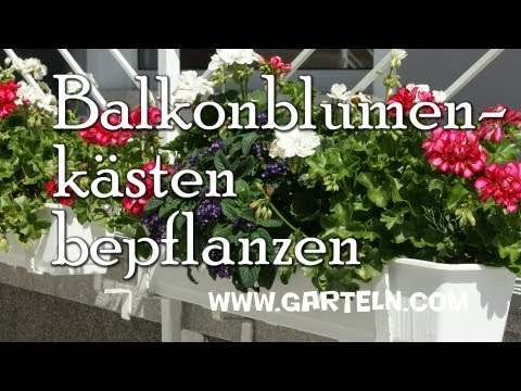 Balkonblumenkästen Pflanzen