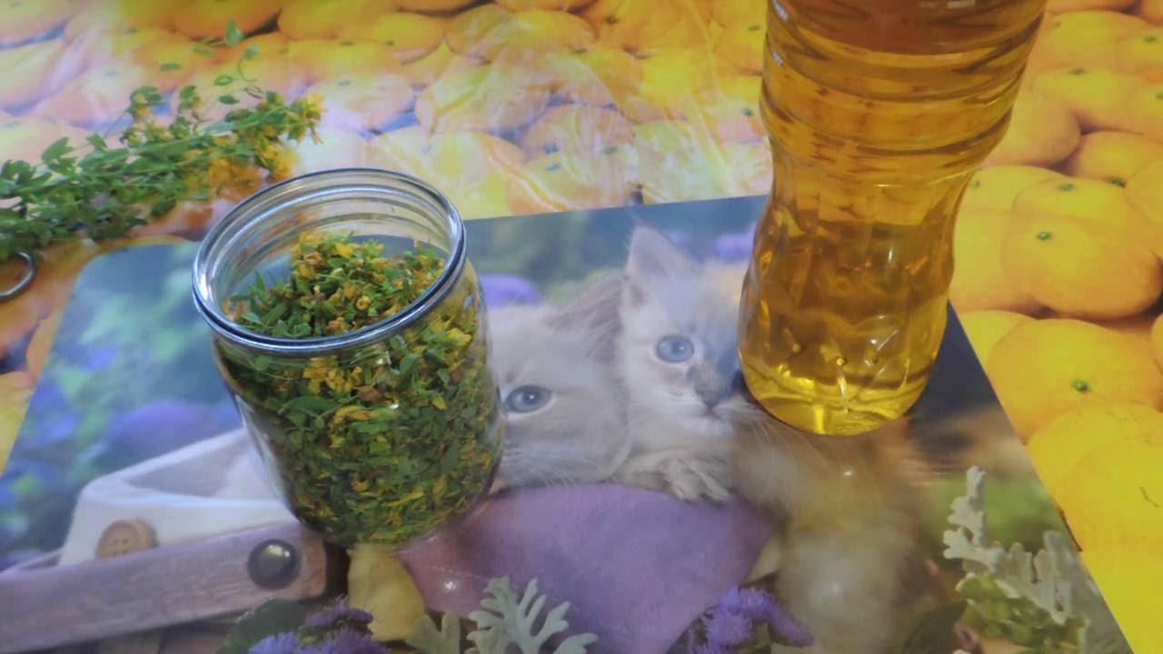 Зверобойное масло как сделать в домашних условиях