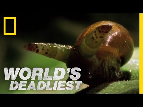 World's Deadliest - Zombie Snails