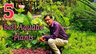 TOP 5 BEST AQUATIC  PLANTS You Can Grow in a Container.