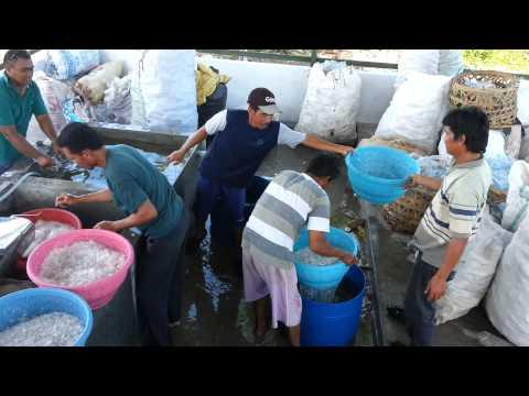 Mesin Pencacah Botol dan Gelas Plastik Pulau Tidung