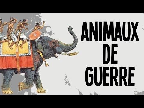 Les 5 animaux de guerre - Nota Bene #15