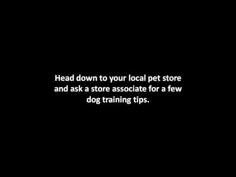 0 Dog Training Tips | How To Train A Puppy