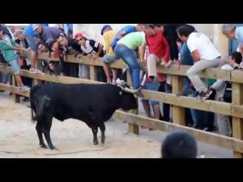 Ultima Largada  de touros, Festas de S. Pedro no Montijo.