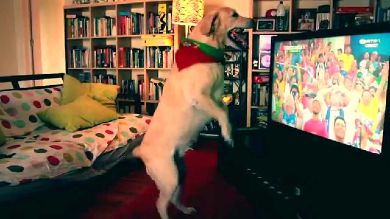 [Soccer Dog Watches The Game And Cheers For His Time] Video