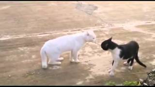 Epic ninja animals funny animals 2013