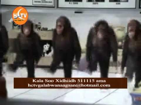 galab wanagsan 16.02.2012 sofiya prt qalbo.mpg