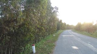 Quốc lộ N2 xuyên Đồng Tháp Mười (Cao Lãnh - Tây Tiền Giang - Tây Long An) - chiều 30 Tết 2017