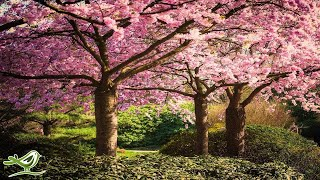 Beautiful Relaxing Music: Japanese Music, Chinese Music, Romantic Music, Meditation Music ?106