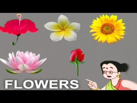 Play & Learn Flower - Animated Series