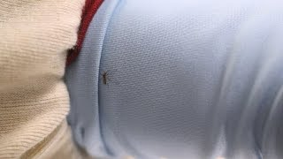 Mosquito Stopper? Permethrin-Treated Shirts Tested | Consumer Reports