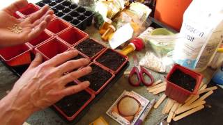 For New Gardeners: How to Seed Start Cantaloupes and Water Melons Indoors: Fruits? - MFG 2014