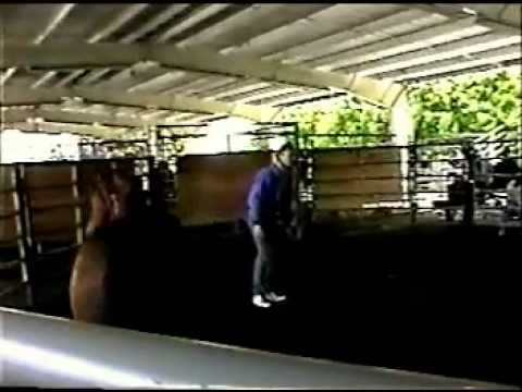 Darik Anderson Wild Mustang Stallion Demo horse training part 1 of 3, first contact Music Videos