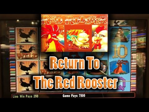 💰 The Raja Returns To The Red Rooster 🐓