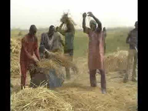Niger State IFAD VCDP-Thresher Demonstration