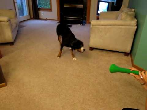 Dog vs. Vuvuzela - Dog Wins