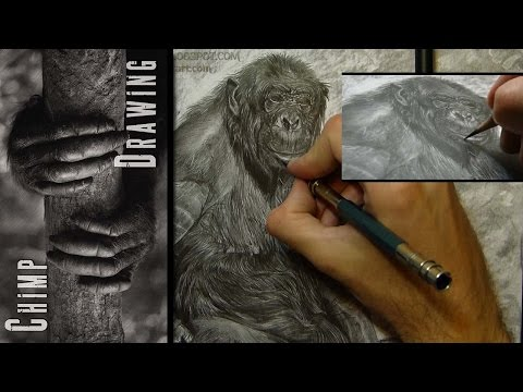 Chimp - Drawing