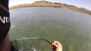 Main fork Eel river steelhead, with underwater release