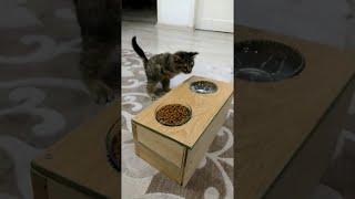 Cat Uses Special Feeder || ViralHog