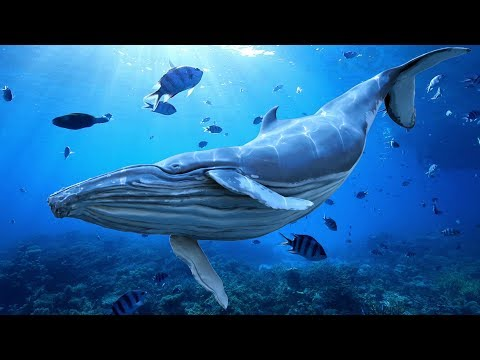 "Download Peaceful Music, Relaxing Music, Instrumental Music ""Cry of The Blue Whale"" by Tim Janis"