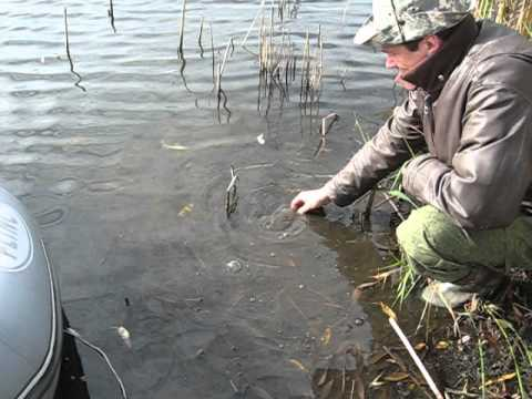 рыбалка в тамбове новые