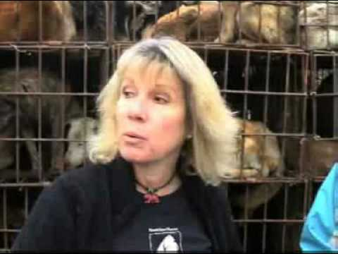 Animals Asia Helps Save 149 Dogs From Illegal Meat Trader video