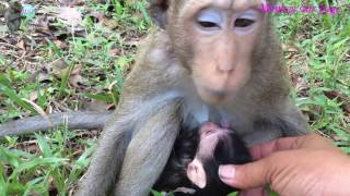 New mom monkey protects his baby / New lovely baby monkey just born