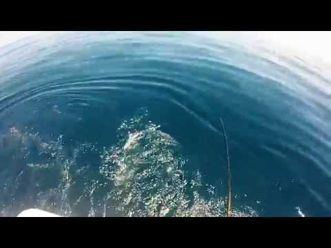 Offshore Fishing, Canaveral FL