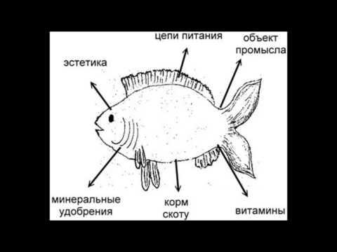 Машина Времени, Андрей Макаревич - Рыбак Рыбака