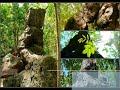 Lagu Daerah Bima - Wadu Ntanda Rahi (lirik)