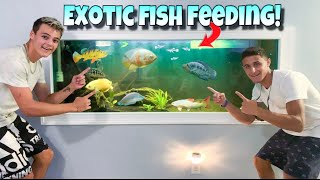 FEEDING All The EXOTIC FISH!! (Crazy)