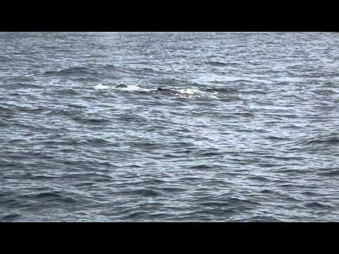 Whale Watching Off Batemens Bay(Short)