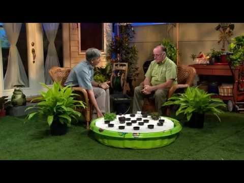 Central Florida Gardening - Wading Pool Hydroponics