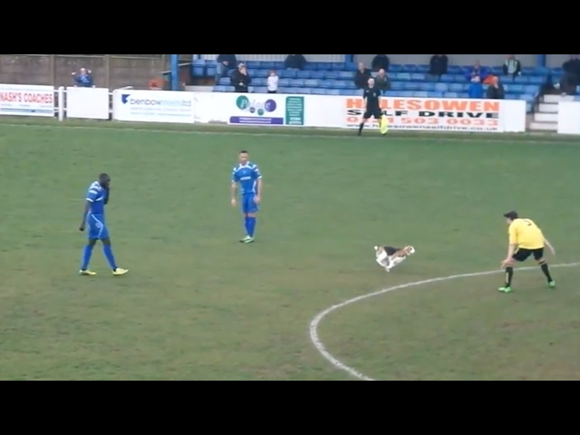 Dog invades football pitch and prevents play for seven minutes – video