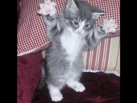 Cute Kitten Pictures! Video