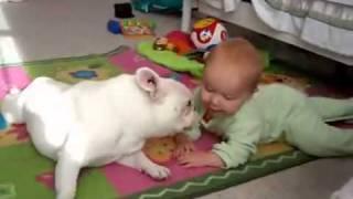 Cachorro ensina bebê a engatinhar