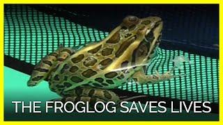 The FrogLog is Saving Animals!