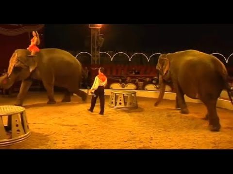 Achter de schermen bij Circus Belly