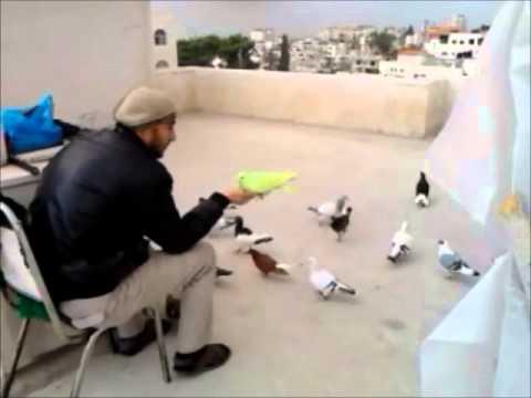 حمام كش-وزق-رام الله Music Videos
