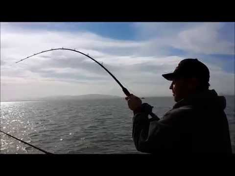 Sturgeon Fishing Right Hook