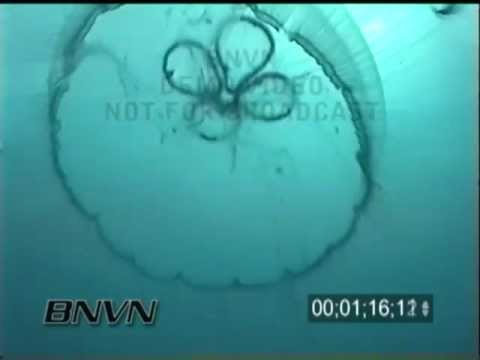 9/1/2000 Gulf Of Mexico - Sheridan Ship Wreck and Jelly Fish Part 2