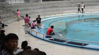 Dolphin Show @ Underwater World | Sentosa Singapore