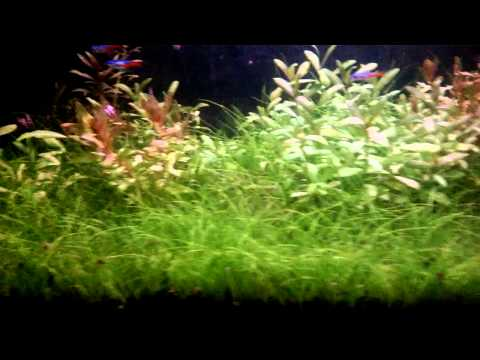 After using UV sterilizer on a planted tank