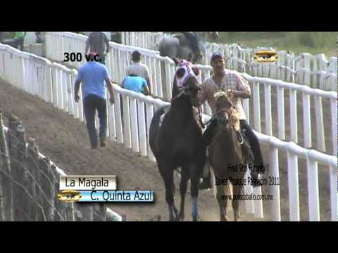 Puro Caballo final Cardenas 2011.mpg