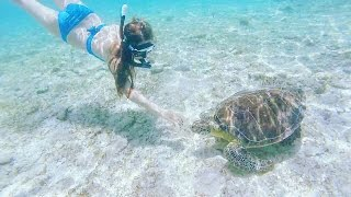 CAYMAN ISLANDS - HUGE FMA!!! (Swimming with turtles, jet skiing, feeding birds...)