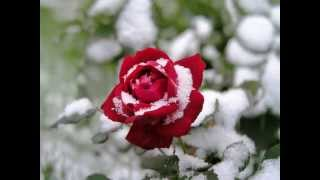 PAT BOONE - Red Roses For A Blue Lady
