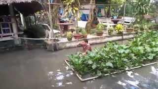 Kéo cá Lóc 7kg tại Quán Miệt Vườn, Tiền Giang