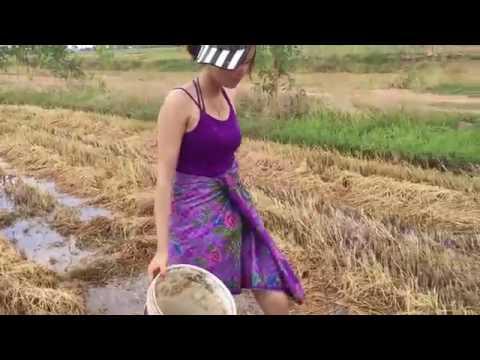 gadis cantik mencari ikan di sawah dogdog (pamugas)