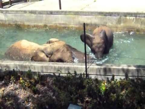 ゾウの水浴び20100817 145