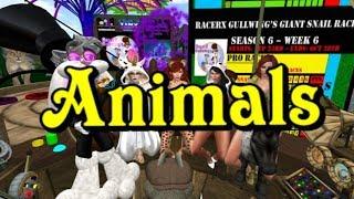 Giant snail race 494 17 Nov 4 Animals